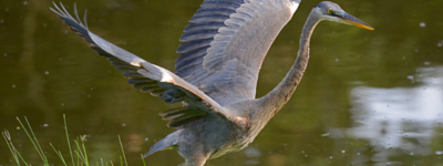 step-into-your-brilliance-heron