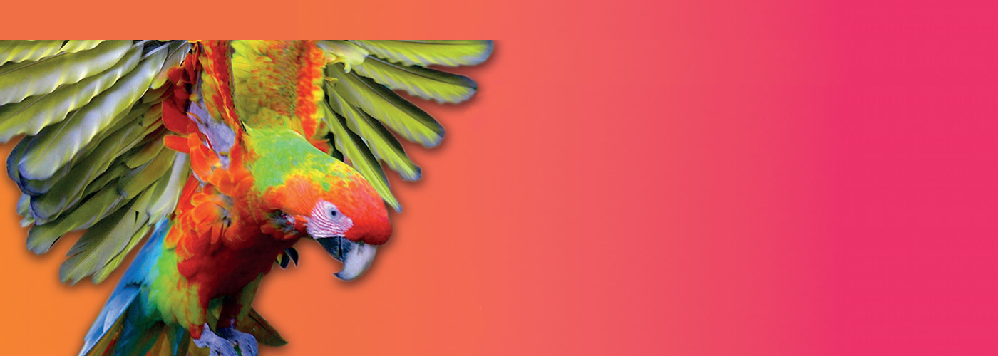 Instantaneous Transformation Costa Rica 2018