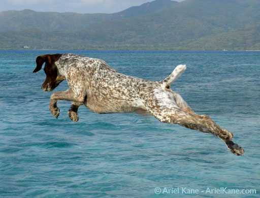 dog-leaping-cropped