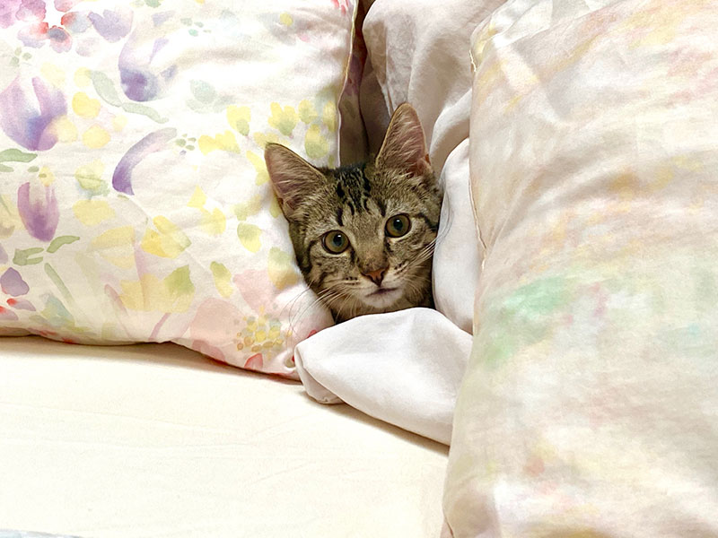 Baby the kitten in bed