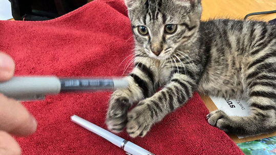 Baby the kitten playing with pens