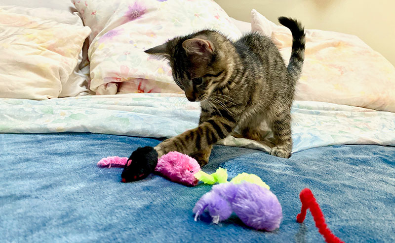 Baby playing with toy mice
