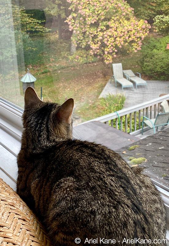 Baby the kitten in the window