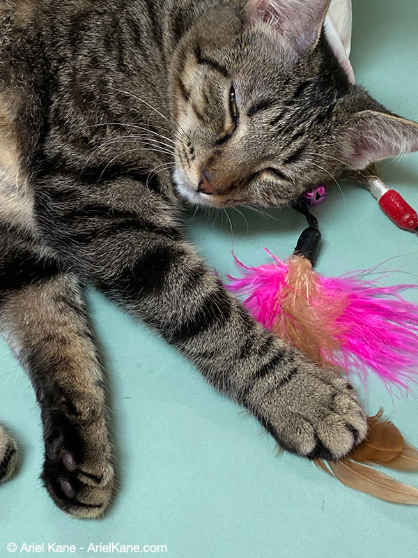 """Baby the kitten with """"fishing"""" flies"""