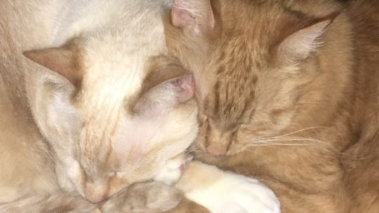 Bacon Bit the Cat cuddling with his siblings